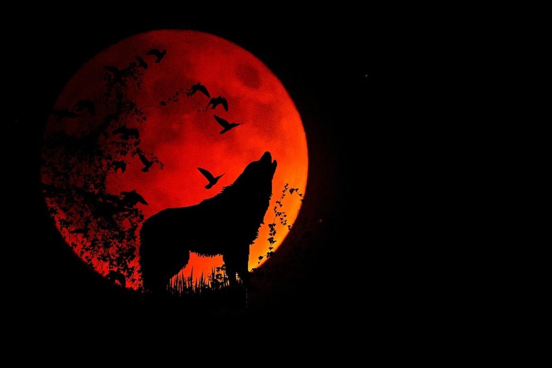 full-moon-1776051_1280